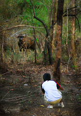Kawal wildlife sanctuary (cishore™) Tags: india june wildlife hyderabad bison 2009 cishore kishore hws gaur kawal nagarigari indianbison kishorencom hwstour kawals