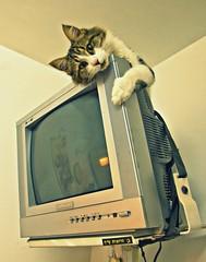 screen saver (A   M) Tags: cat screensaver screen saver מסך שומר