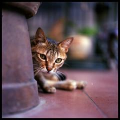 Hide n Seek (Lefty Jor) Tags: street hk 120 6x6 film cat t hongkong day dof kodak bokeh hasselblad hide seek planar taio 500cm carlzeiss proxar 80mmf28 ektacolorpro160