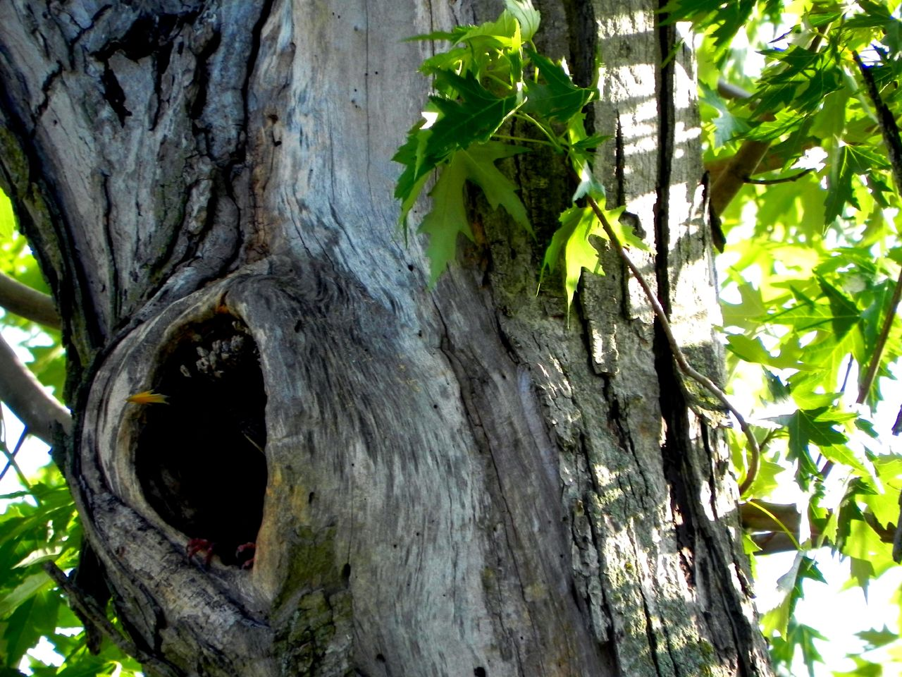 05-22-2010_Bird in Tree cavity
