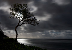 By The Light Of The Silvery Moon 5427 (casch52) Tags: ocean longexposure trees light sea summer moon hot reflection tree beach water silhouette night clouds canon silver landscape hawaii coast photo sand surf nightscape coconut dramatic wave fullmoon spooky fantasy photograph kauai getty romantic moonlight haunting silvery mb shimmer kapaa obscure moonshine monopod silohouette 40d copyrightedmaterialallrightsreserved copyrightedallrightsreserved