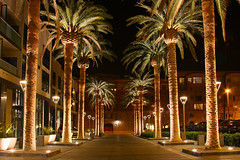 Palm Row (the_tahoe_guy) Tags: california street longexposure nightphotography travel pink blue trees wallpaper vacation favorite orange usa building tree cars fountain beautiful look car night canon landscape fun photography eos gold photo interesting rocks colorful downtown weekend creative sanjose best palm downtownsanjose mustsee 40d canon40d thetahoeguy