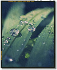 Ethereal Drops () Tags: ethereal waterdroplets