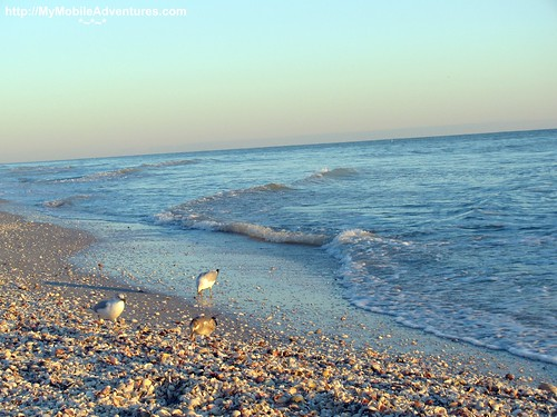 IMG_0192-birds-feast-shells-West-Gulf-Beach