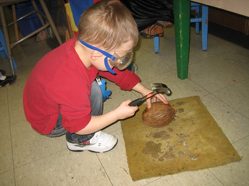 Trying to crack open the coconut at preschool