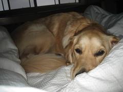 Goodmorning Rosie