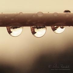my house () Tags: house reflection andy water rain casa bokeh andrea andrew drop line laundry acqua distillery pioggia rs bucato riflesso goccia benedetti bokehlicious nikond40