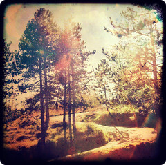 Road to happiness (Mr.PartyHut ) Tags: road wood alberi forest strada path happiness flare sentiero appennino bosco foresta felicit blueribbonwinner ttv montefalcone mywinners diamondclassphotographer flickrdiamond citrit platinumheartaward goldstaraward multimegashot marcomatteucci goldenheartaward