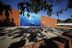 Dolphins (QsySue) Tags: tree wall mural branches wideangle dolphins bluw sigma1020mm nikond200 palisadeshighschool