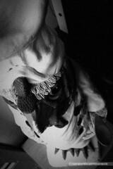 Statue of a chicken chef (mambastic photography (aka mamba909)) Tags: laphotocontest09