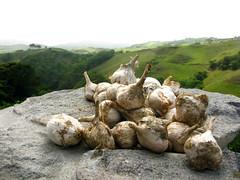 bawang (Renz Ticsay) Tags: philippines basco batanes rorenz