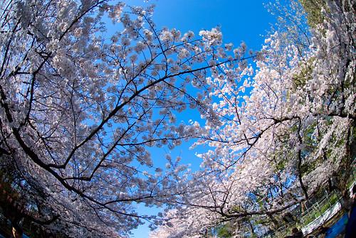 Ueno Park 11