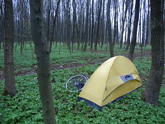 Camping in a woodland glade