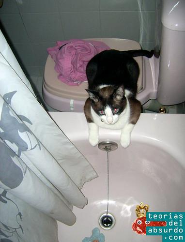 mi gato mirándome mientras me ducho