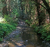 20090422 Muir Woods w Ferns
