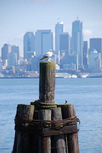 Urban Seagull by J. Silverstein