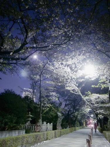 青山霊園通り