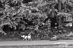 Dog traction (Eliseo Oliveras) Tags: life street city brussels people urban blackandwhite bw dog white black blanco girl europa europe belgium belgique belgie negro bruxelles daily bn skate roller bruselas brussel belgica rollerskate watermael eliseooliveras eliseooliveras