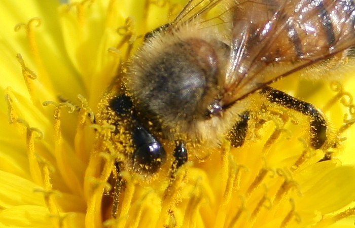 05-03-bee1