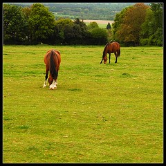 horsesgrazing (Ian's Art....) Tags: horses green nature rural downs landscape sussex saturated outdoor colourful galope iansart