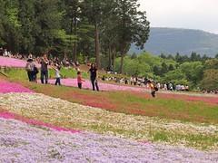 芝桜の丘(2)