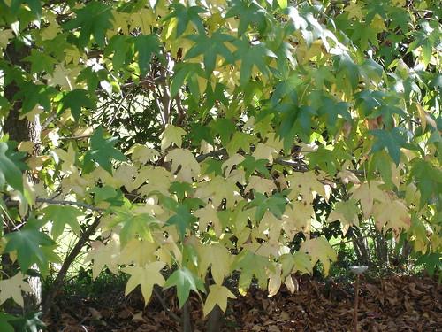 1-5-09 colores de otoño