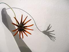 #41/09 (emasplit) Tags: flowers orange colours emasplit explore2009
