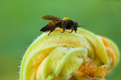Lucky Bee. Lucky Me. (Kausthub) Tags: india macro digital canon bug insect handheld dslr 2009 platinumphoto colorphotoaward canoneos5dmarkii canonefllens