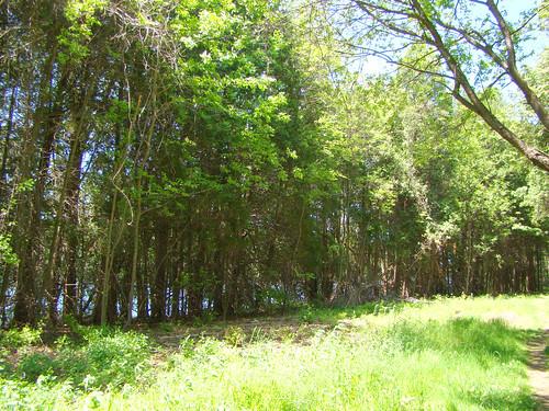 cedar path left