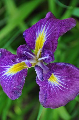 Botanical Garden 069