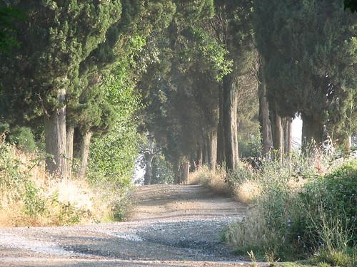 Allee vor der Villa Palagione