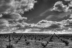 As far as the eye can see / Hasta donde la vista alcanza (Manuel Atienzar) Tags: espaa landscape spain wine paisaje vineyards 1001nights vino lamancha albacete castillalamancha vias viedos flickrestrellas manuelatienzar