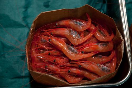 redshrimp