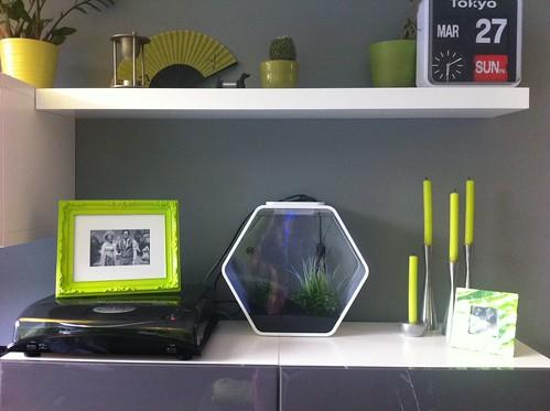 Modern fish tank on a shelf - a photo on Flickriver