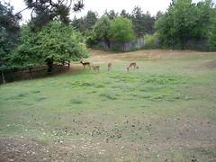 S4026240 (pappgabor) Tags: zoo veszprém 2007