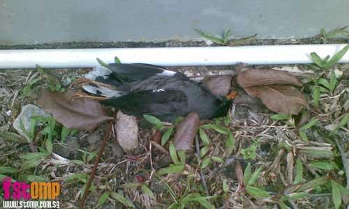 Dead birds found near Taman Jurong market
