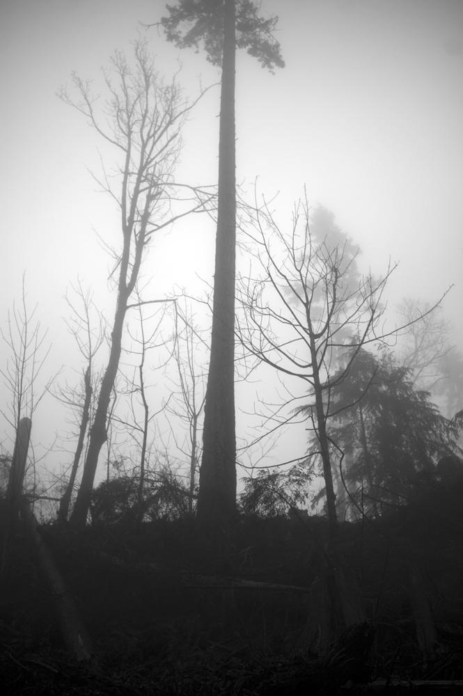 fog tall