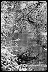 IceStorm09-17 (chuck.heeke) Tags: kentucky icestorm louisville january2009