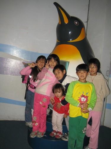 你拍攝的 5國王企鵝像。