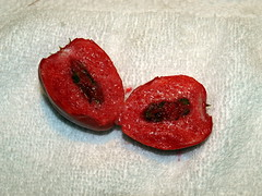 Inside the Mystery Fruit