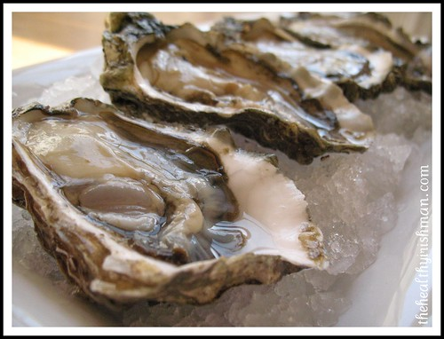 Raw Hood Canal Oysters