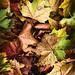 Autumn Walk I by raventhird