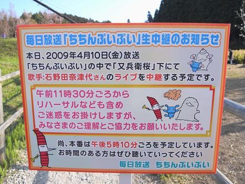 09-04-10【桜】@又兵衛桜-05