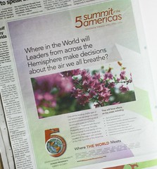 Flowers in the Summit Ad