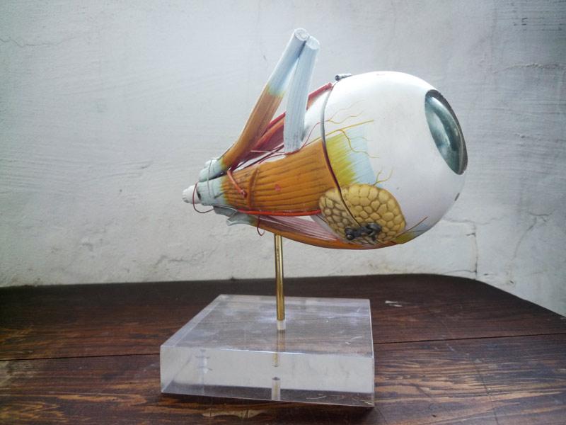 eyemodel2