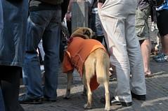 haarlem nederland thenetherlands fair kermis facemepls nikond300 feestondanksdramainapeldoorn hondmetoranjedekentje dogwithorangeblanket