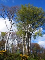 May Day - second nature walk, near Delgany
