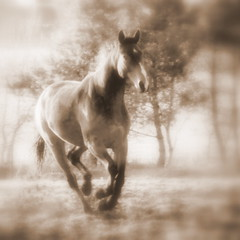 Spirit Horse (onceawildchild) Tags: world horse sepia gold scotland spirit quality live may we seal 2009 canter loh the cuandor mudmonster in mywinners heartsawards spiritofphotography vanagram vanagrammofon