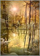 Survive (Jean-Michel Priaux) Tags: winter sunlight snow france cold reflection tree art texture ice nature water yellow photoshop landscape deutschland nikon hiver dream surreal dreaming reflect alsace serene rhine rhein froid hdr glace anotherworld savage glac ried rhin d90 priaux abigfave aplusphoto shoenau vanagram vosplusbellesphotos