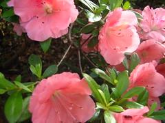 Savannah spring 09 042
